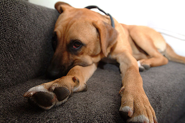 ansel-the-dog-71254_0