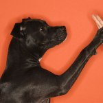 dog-shake-hand