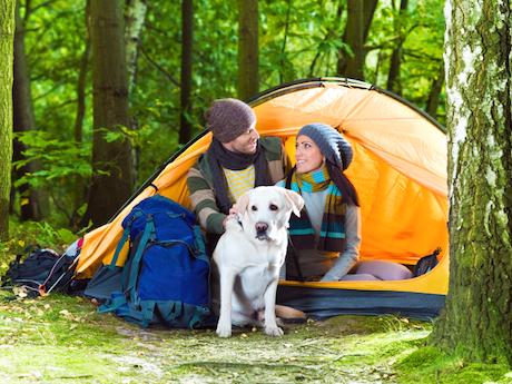 Dog-camping-tips