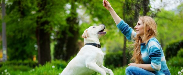 Essential-Hand-Signals-Dogs