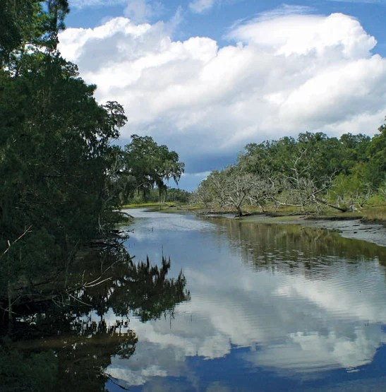 Cumberland Island National Seashore - Tidal creeks winding through salt marsh sloughs provide a highway for alligators to access hunting grounds and, twice a day, a rich feeding ground for egrets, ibises and herons. Photo By Barbara Cohea
