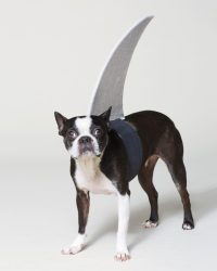 DIY Shark Fin Costume For Your Pup - All Created
