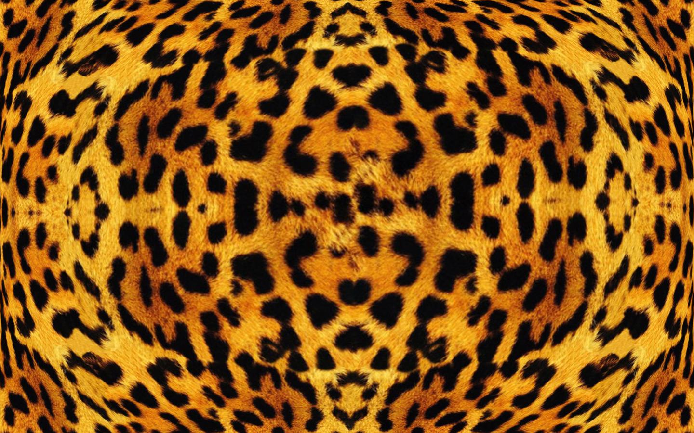 Leopard Animal Print Wallpaper African Leopard Texture Best Free Texture All Design