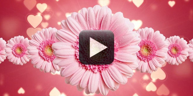 Flowers Moving Background - Flowers Healthy