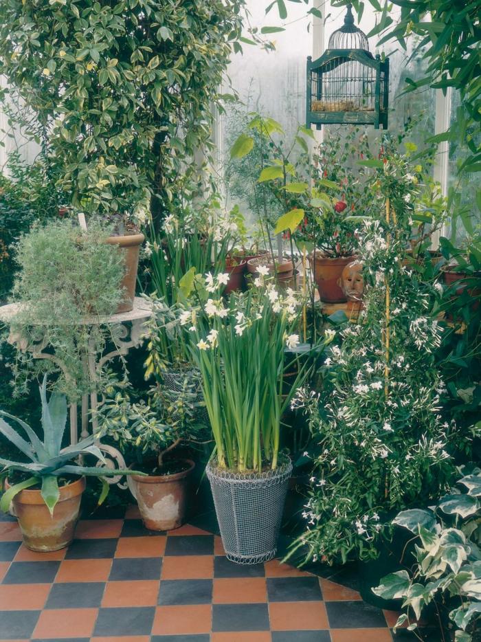 Tipps Pflege Pflanzen Wintergarten Modell - alitopten.com -