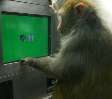 habit_2_monkey