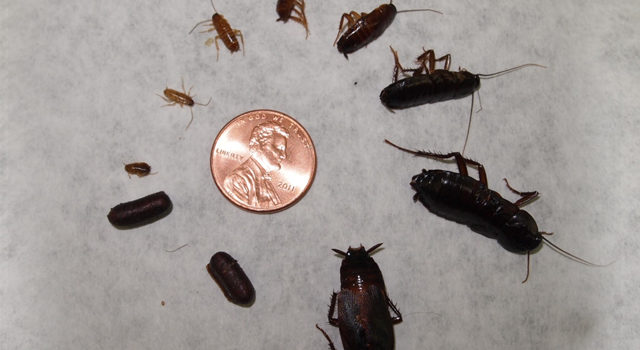What to do when you see BABY ROACHES? FIND OUT HERE - Exterminator