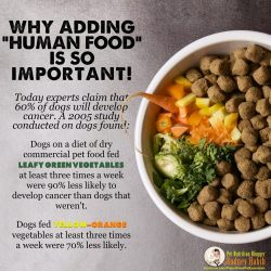 Small Of Best Dog Food For Labs