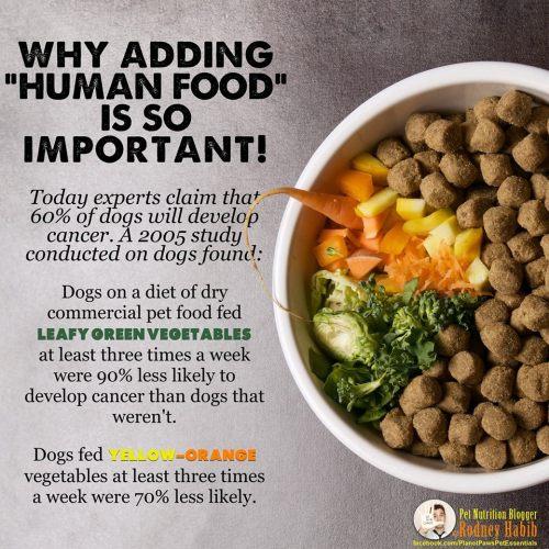 Medium Crop Of Best Dog Food For Labs