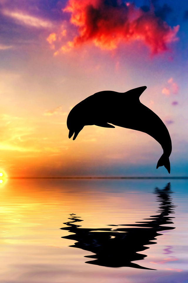 Cute Wallpapers For Iphone 5c Dolphin Jump Iphone Wallpaper Hd