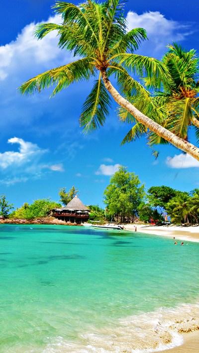 Tropical Palm Beach iPhone Wallpaper HD