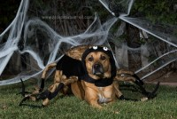 Bailey the Spider! (Howl-O-Ween 2015) San Diego Pet ...