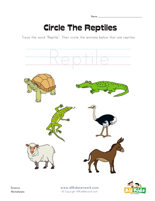 Circle the Reptiles Worksheet All Kids Network