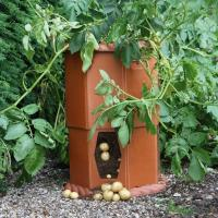 Growing Potatoes in a Barrel - Patio Growing Potatoes