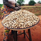 Woman Selling Ground Nuts