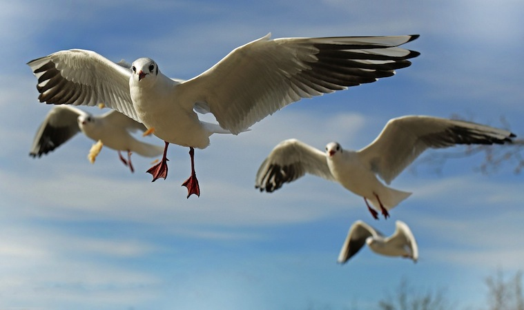 Fall Bird Feeder Wallpaper Weather Proverbs Folklore Prognostics Birds The Old