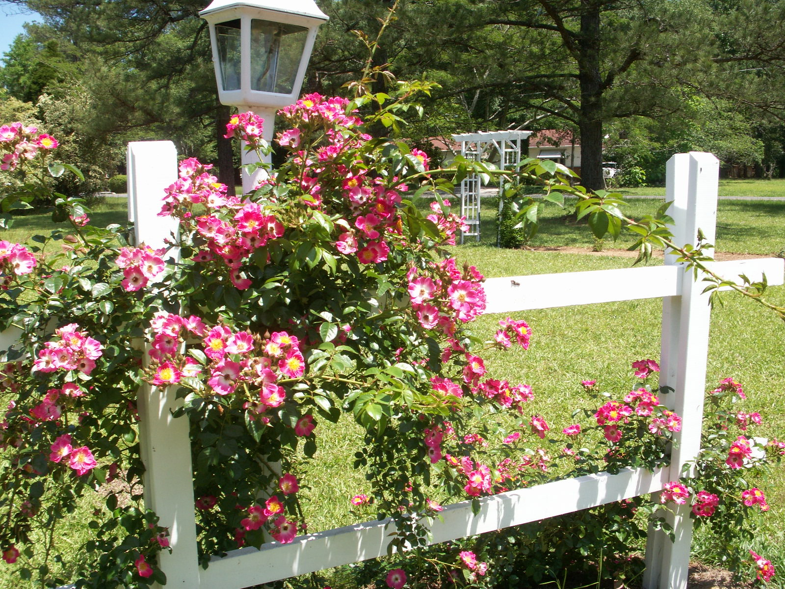 Fall String Lights Wallpaper Weddings Garden Wedding Ideas Wedding Flowers The Old Farmer S