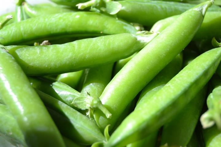 When To Plant Peas   Old Farmer'S Almanac