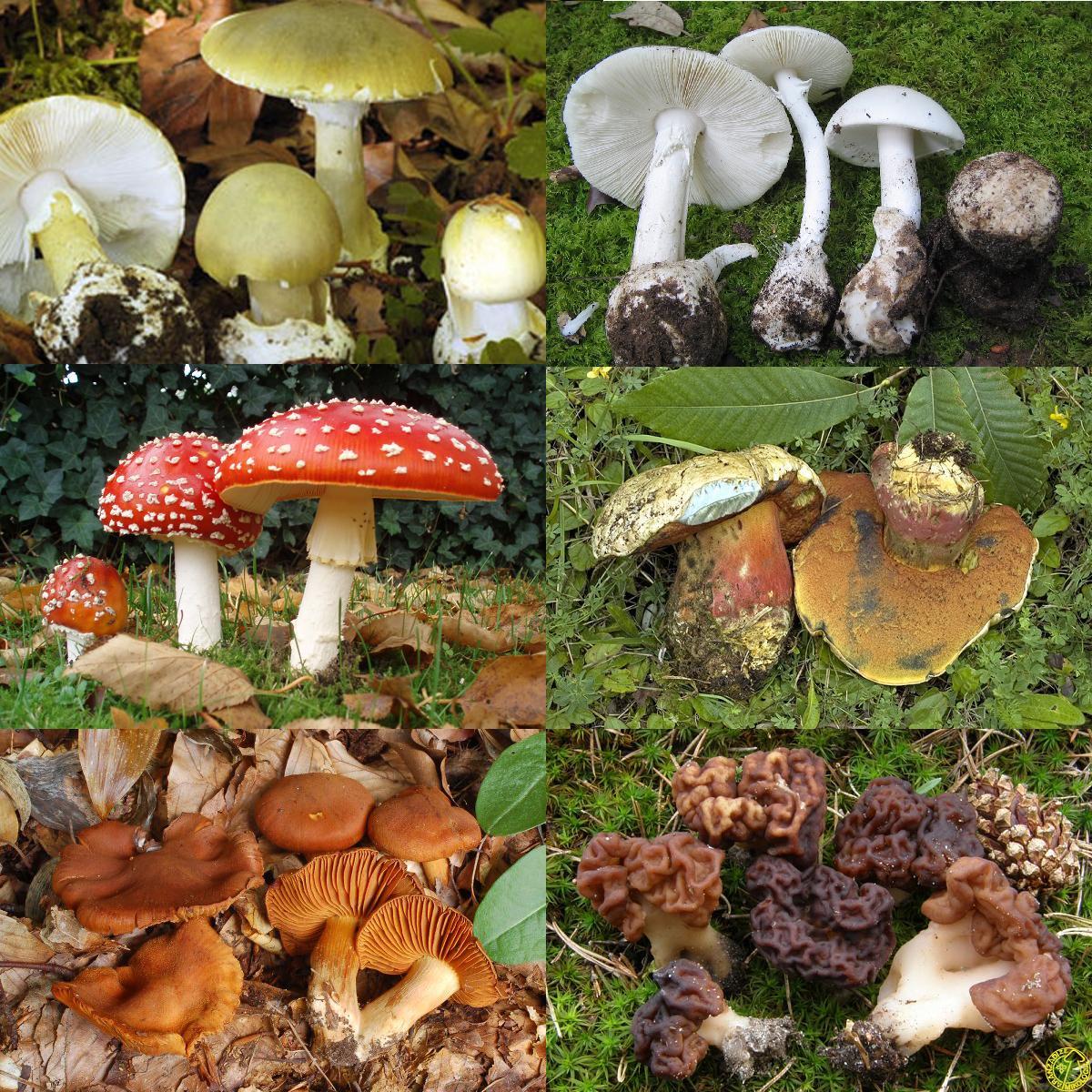 M xico cuenta con 100 mil tipos de hongos de los cuales for Calentadores para jardin tipo hongo
