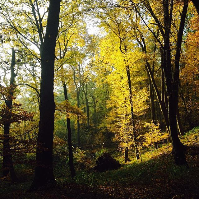 October fall colours in Slovakia - Almost Bananas