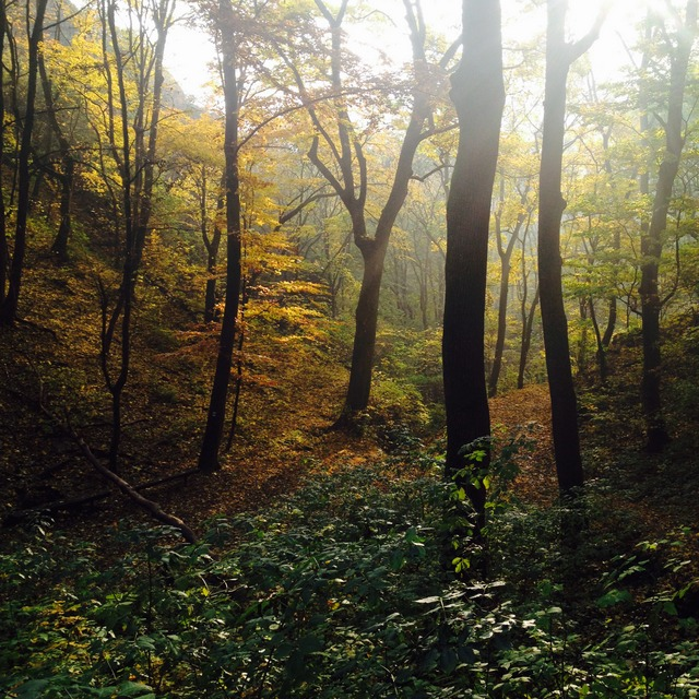 Fall colours in the Male Karpaty of Slovakia - Almost Bananas
