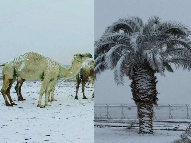 تساقط الثلوج في شمال السعودية