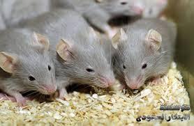 شركه مكافحه الفئران فى الرياض