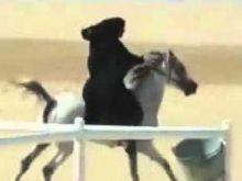 سجن إماراتي 10 سنوات لمحاولته اغتصاب سعودية بعد أن ادعى أنه مدرب خيل
