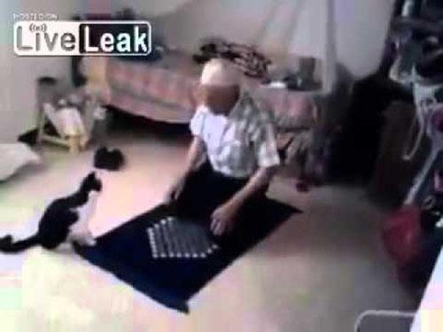 قط (عبيط) يزعج صاحبه