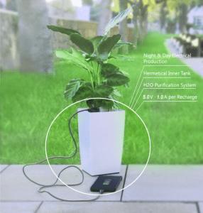 اشحن هاتف بالنبات
