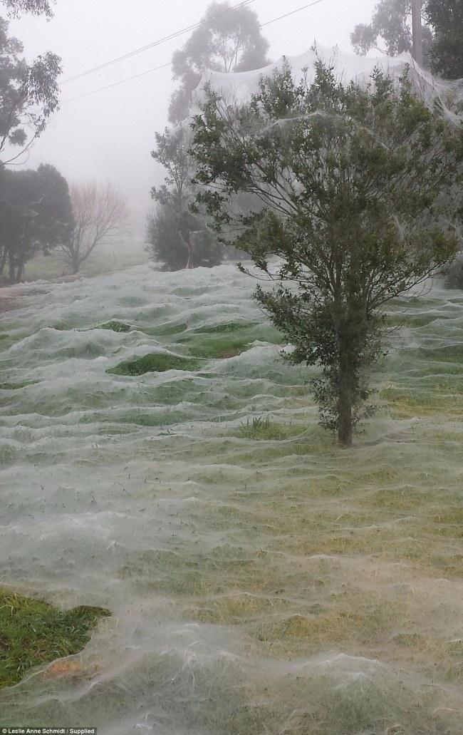 فتاة تكتشف مكانًا يثير الرعب خلف شباك عنكبوت2