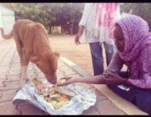 خدمة حيواني المحبوب ...حياة جديدة للقطط والكلاب