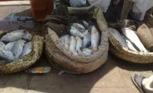 سوق السمك يشوى بإهمال هيئة النظافة