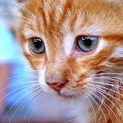 ماذا يحدث لو قصصنا شوارب القطة .. سبحان الله !
