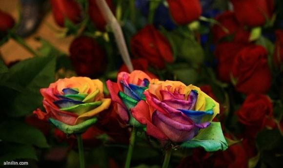 زهور قوس قزح: جمال الزهور وبهاء قوس قزح