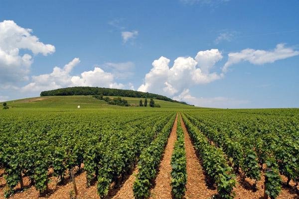 إنتاجية عالية للفول السوداني والذرة بالجزيرة و بسنار