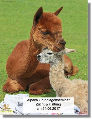 Alpaka Bettdecken Kaufen  Alpakafarm Nieplitzhof Alpakas Zuechter In Berlin Potsdam