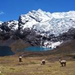 Lagunes et alpagas - Ausangate