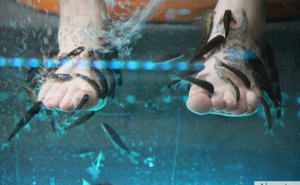 bodyfish_fishpedicure-alsactu4