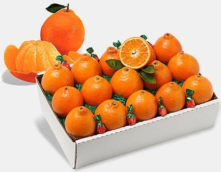 Honeybells, Honeybell Oranges, Florida Honeybells, Tangelos-Al\u0027s