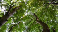 Buchen-Wildnis-Pfad - Naturerbe Wanderwelt