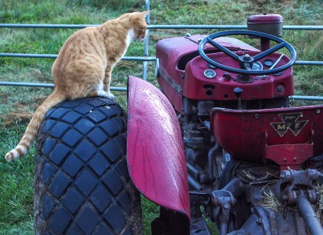 cat on tractor