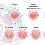 What Properties are Unique to all Stem Cells?