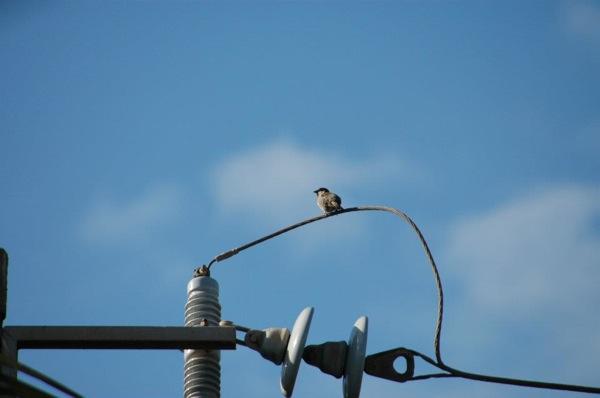 Birds on Maui