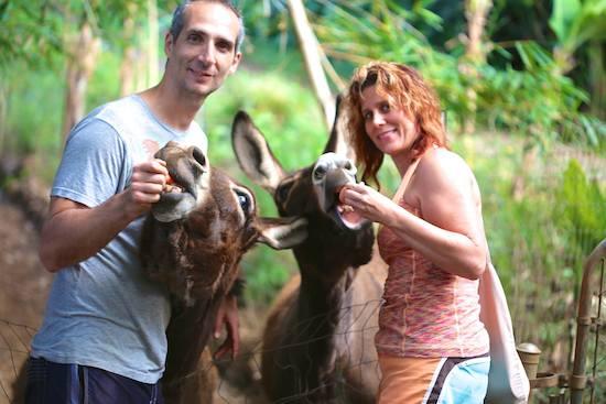 Donkeys at Leilani Farm Sanctuary Maui