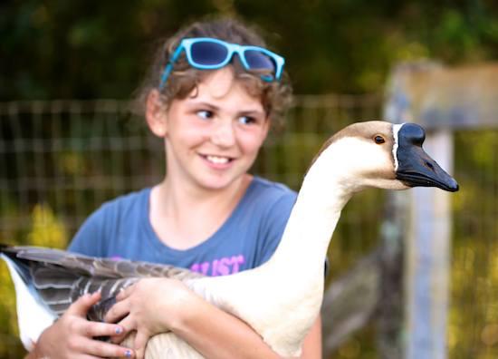 Goose at Leilani Farm Santuary of Maui