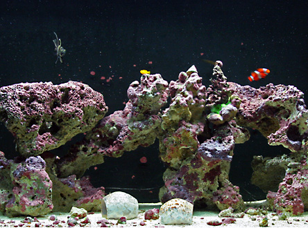 Saltwater fish and live rock