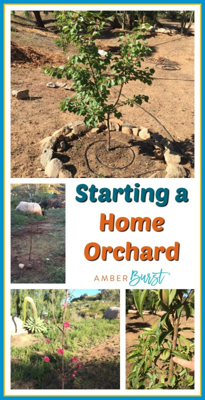 Home orchard pin