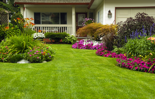 Manicured Yard