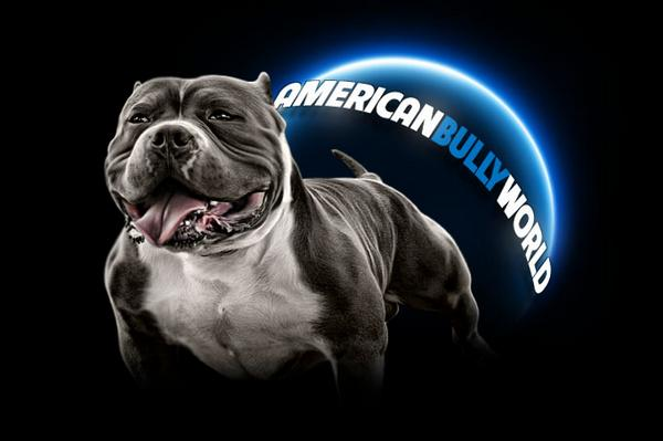 American Bully Questions  Answers - Ask Us Anything